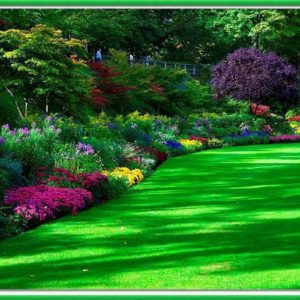 Lawn/Garden